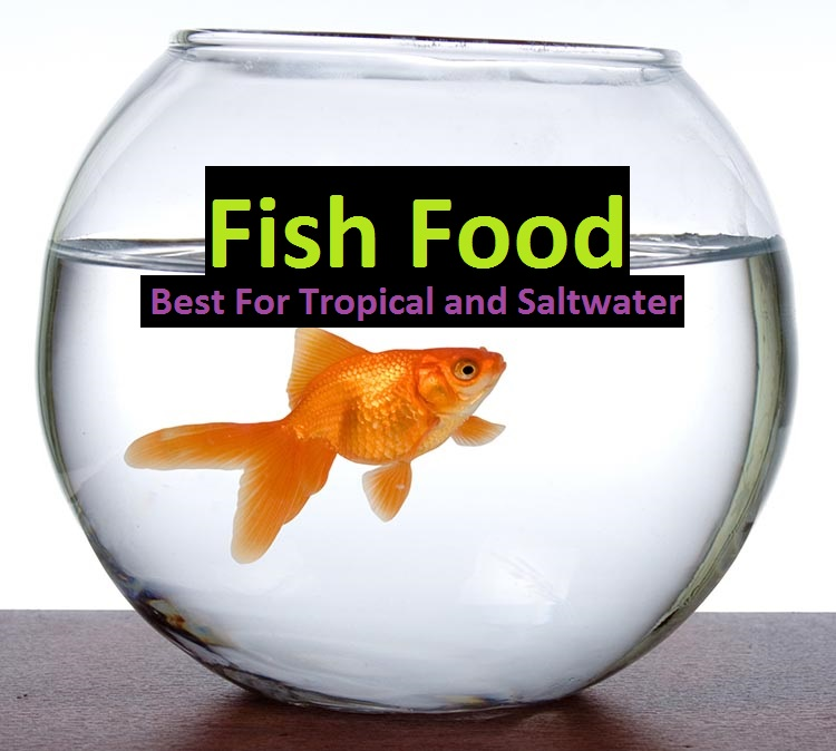 best fishfood