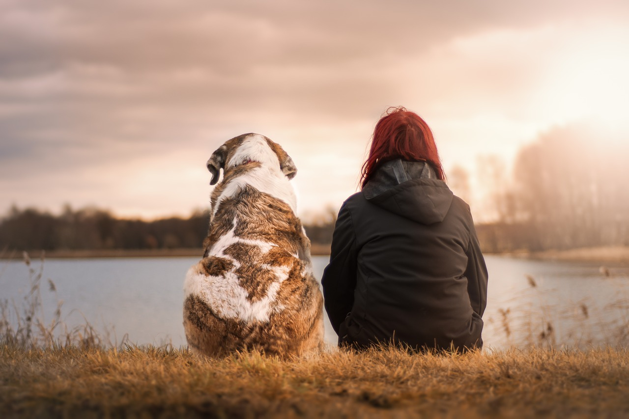 Ultimate Packing Essentials for Travelling with Dogs