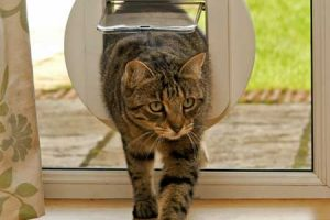 Microchip Cat Flap Work
